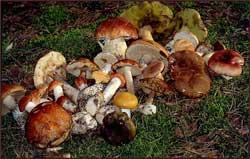 Кое-что о грибах