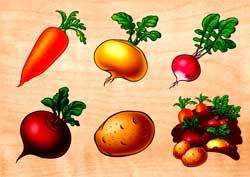 Особенности выращивания корнеплодов