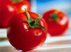 Помидоры - кулинарные прелести и особенности консервирования