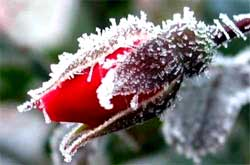Предохранение растений от заморозков