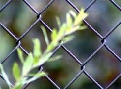 Ограда из проволочной сетки