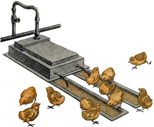 Автопоилки для цыплят