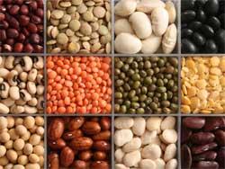 Общие сведения о бобовых овощных культурах