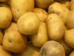 Как получить до тонны картофеля с одной сотки