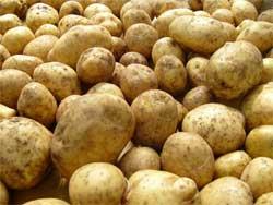 Два урожая картофеля