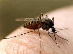 Как снять зуд от комариного укуса