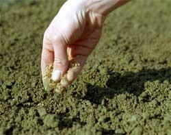 Делаем уплотненный посев овощей