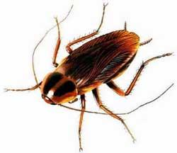 Способы избавления от тараканов