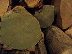 Как предохранить древесину от загнивания