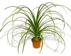 Чем можно удобрять домашние растения