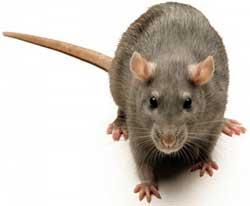 Ультразвуковой генератор для отпугивания крыс