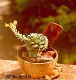 Как создать цветочный горшок из кокосового ореха
