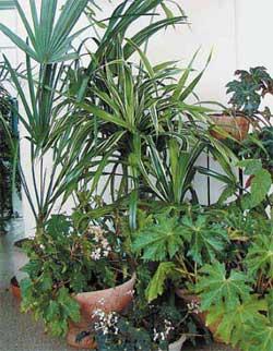 Растения - фитофильтры в интерьере