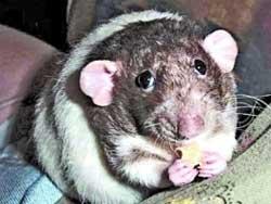 Гони мышей взашей