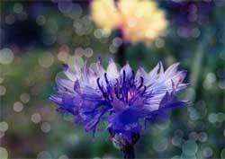 Целебные свойства разных растений - как в короткие сроки восстановить и поправить свое самочувствие
