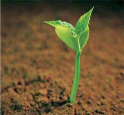 Как прорастает семя