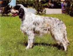 Как применить шерсть длинношерстной собаки