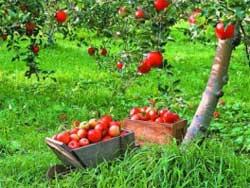 Как правильно собрать и сохранить урожай