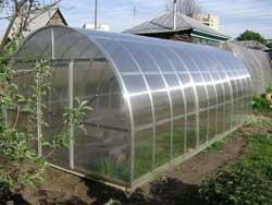 В теплице из поликарбоната можно выращивать свежие овощи круглый год