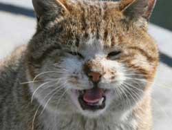 Серенада мартовского кота