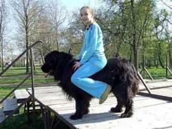 Можно ли ребенку кататься на собаке?
