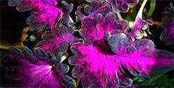 5 самых неприхотливых растений