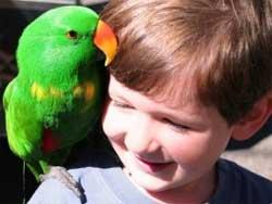 Кое-что о попугаях