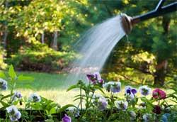 Можно ли поливать огород в полдень?