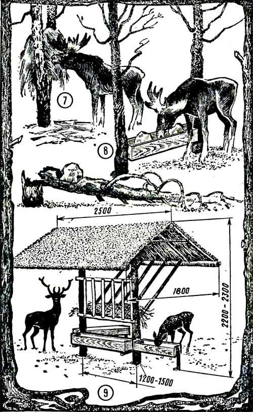 Подкормка зверей