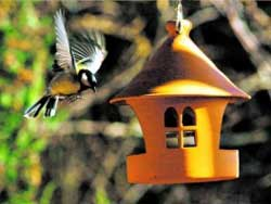 Гнать ли птиц из сада