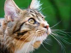 Как кошки переносят одиночество