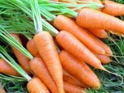 Что с чем сажать, чтобы увеличить урожай