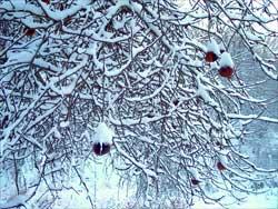 Как уберечь плодовые насаждения от морозов