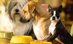 Как выбрать гостиницу для домашних животных