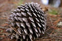 Основные свойства наиболее распространенных древесных материалов