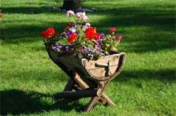 Цветы на даче: какие лучше всего посадить? Фото, названия 2018