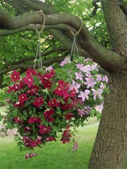 Цветы в подвесных кашпо