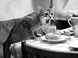 Как отучить домашнее животное есть со стола