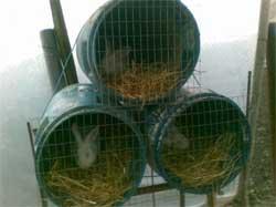 Строим дом для кроликов своими руками