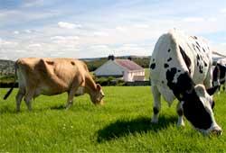 Как правильно организовать фермерское хозяйство