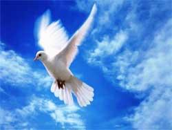 Разведение и уход за голубями
