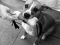Как сделать игрушку для собаки
