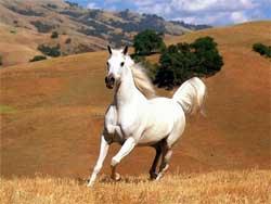 Содержание и кормление лошадей