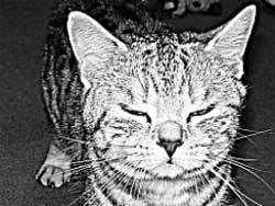 Почему мурлычет кошка