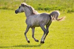 Воспитание молодой лошади