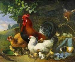 Разведение и содержание домашней птицы