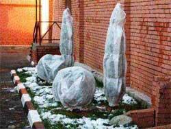 Зимние укрытия для декоративных кустарников