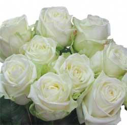 Розы - выращивание и уход