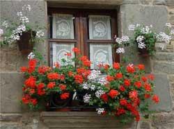 Как украсить окна дома снаружи цветами и растениями