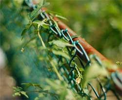 Чем закрыть забор из сетки на даче